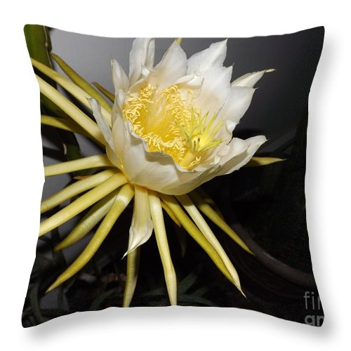 Flower Throw Pillow featuring the photograph Dragon Fruit Blossom II by Jussta Jussta