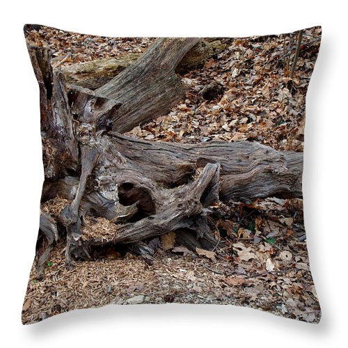 Tree Wood On Ground Throw Pillow featuring the photograph Dragon Skull by Kitrina Arbuckle