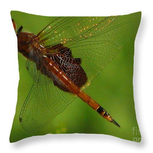 Art For The Wall...patzer Photographydragonfly Throw Pillow featuring the photograph Dragonfly Art 2 by Greg Patzer
