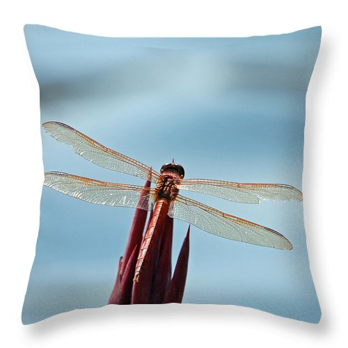 Dragonfly Throw Pillow featuring the photograph Dragonfly Days by Suzanne Gaff