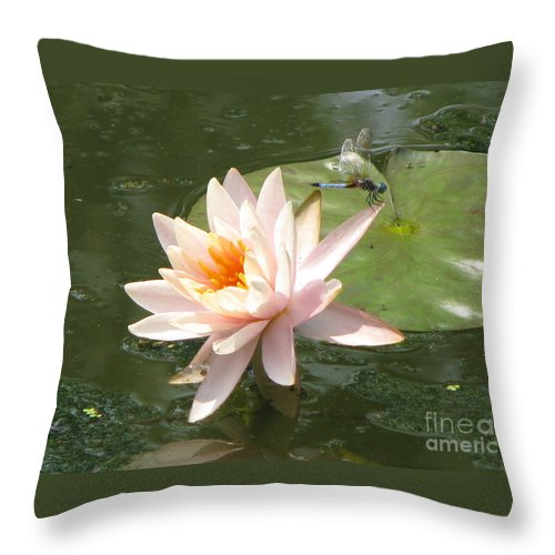 Dragon Fly Throw Pillow featuring the photograph Dragonfly Landing by Amanda Barcon