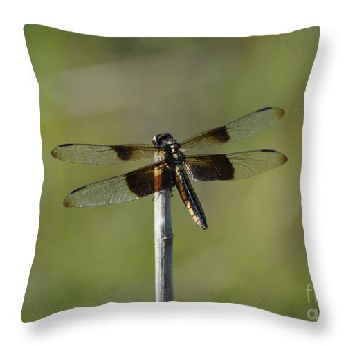 Dragonfly Throw Pillow featuring the photograph Dragonfly On A Stick by Cheryl McClure