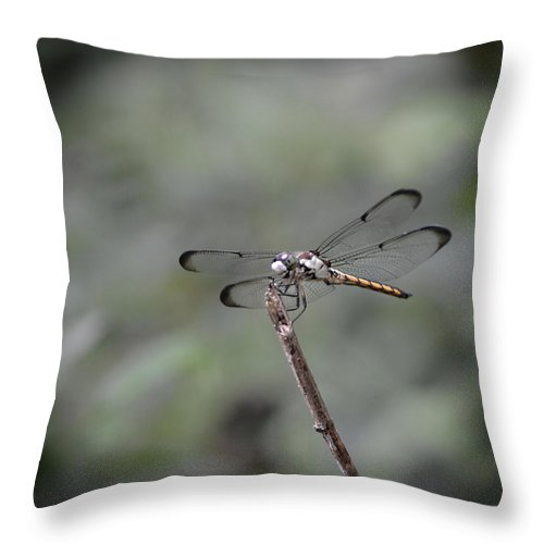 Dragon Fly Throw Pillow featuring the photograph Dragonfly Perched by Maggy Marsh