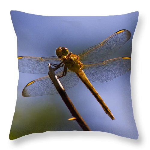 Nature Throw Pillow featuring the photograph Dragonfly by Sharon M Connolly