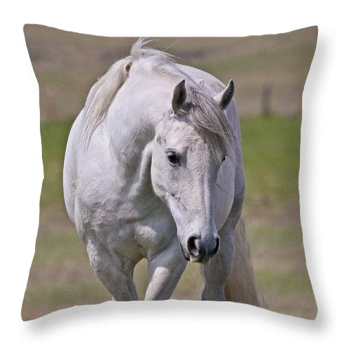 Horses Throw Pillow featuring the photograph Lipizzane Dreaming by Athena Mckinzie