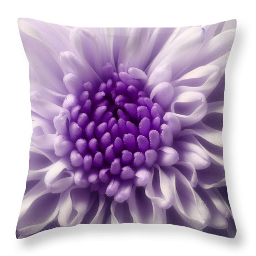 Purple Flowers Throw Pillow featuring the photograph Dreaming In Color by Michael Eingle