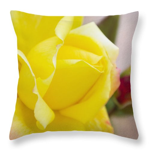 Yellow Rose Throw Pillow featuring the photograph Dream's Come True By Walter Herrit by Walter Herrit
