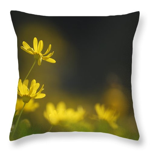 Flower Throw Pillow featuring the photograph Dreams Daisies by Guido Montanes Castillo