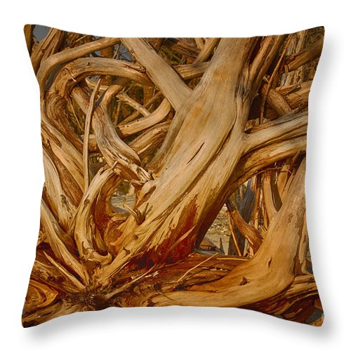 Driftwood Throw Pillow featuring the photograph Driftwood Jungle Botany Bay by Carrie Cranwill