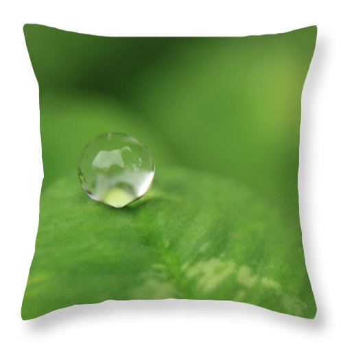 Water Throw Pillow featuring the photograph Drop On Green by M W Kearney