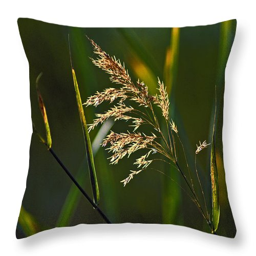 Dry Grass Throw Pillow featuring the photograph Dry Grass by Howard Stapleton
