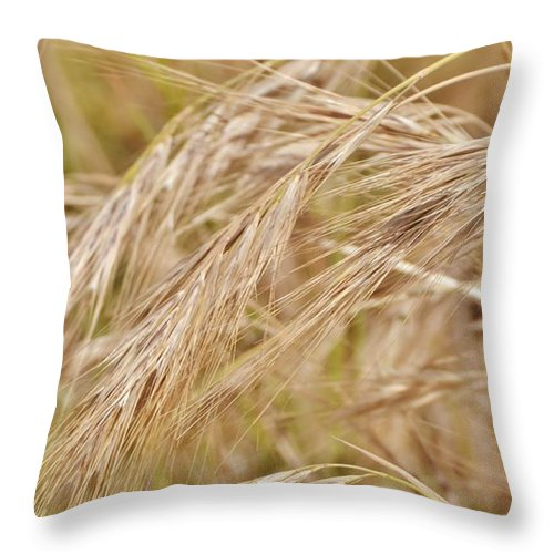 Close Up; Dry; Grass; Wind; Rural; Meadow; Brown; Beige; Plant; Nature; Background; Decorative; Throw Pillow featuring the photograph Dry Grass... by Werner Lehmann