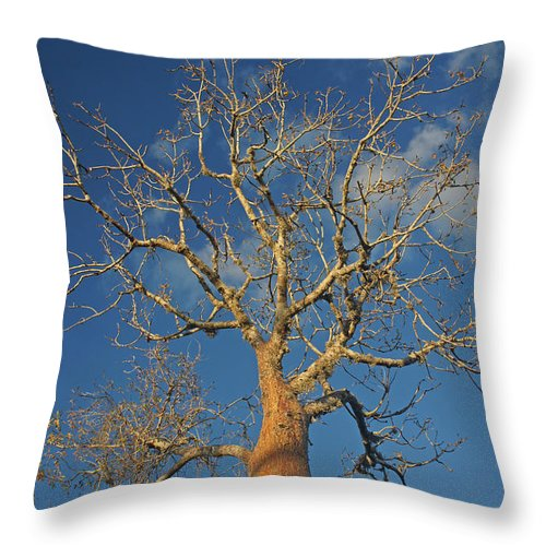 Africa Throw Pillow featuring the photograph dry season in Madagascar by Rudi Prott