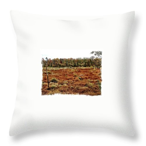 Marsh Throw Pillow featuring the photograph Dry Swamp by Michele Monk