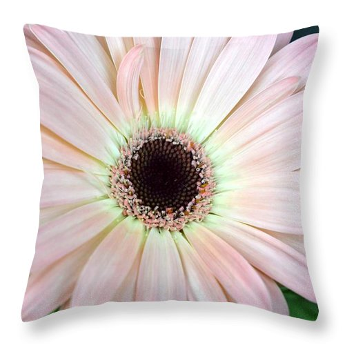 Gerber Throw Pillow featuring the photograph Dsc0001d by Kimberlie Gerner