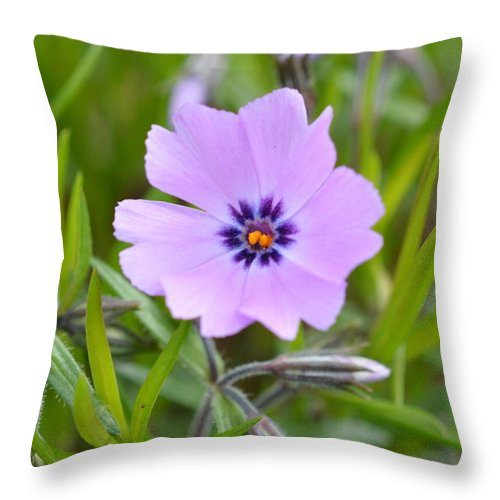 Colorful Throw Pillow featuring the photograph Dsc0040-002 by Kimberlie Gerner