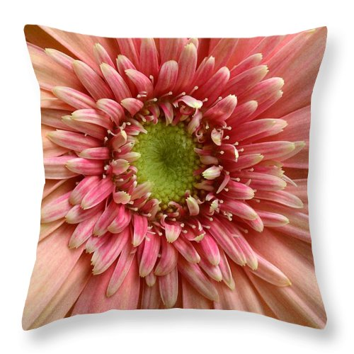 Gerber Throw Pillow featuring the photograph Dsc250d-002 by Kimberlie Gerner