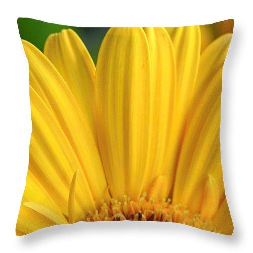 Gerber Throw Pillow featuring the photograph Dsc331d-004 by Kimberlie Gerner