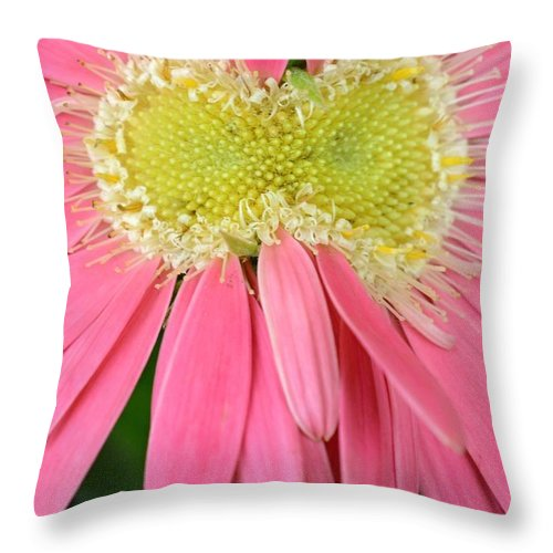 Gerber Throw Pillow featuring the photograph Dsc419d2 by Kimberlie Gerner