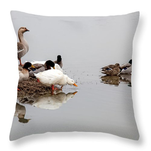 Duck Throw Pillow featuring the photograph Duck Duck Goose Goose... by Mark Alder