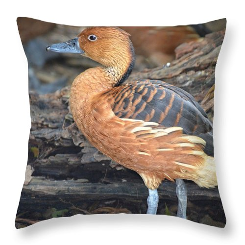Duck Throw Pillow featuring the photograph Duck Duck Goose by Maggy Marsh