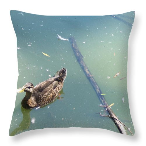Duck Throw Pillow featuring the photograph Duck In Pond by Michelle Miron-Rebbe