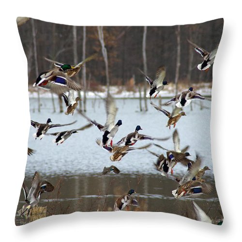 Animals Throw Pillow featuring the photograph Ducks Away by Lynne Shields