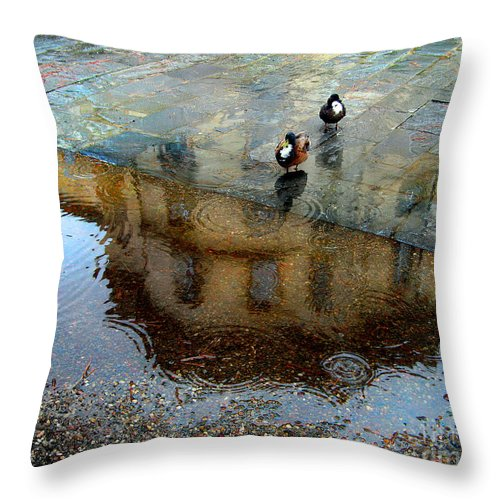 Mallard Throw Pillow featuring the photograph Ducks Of Isola Madre.italy by Jennie Breeze