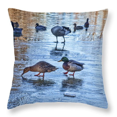 Mallard Duck Throw Pillow featuring the photograph Ducks On Ice by Diane Macdonald