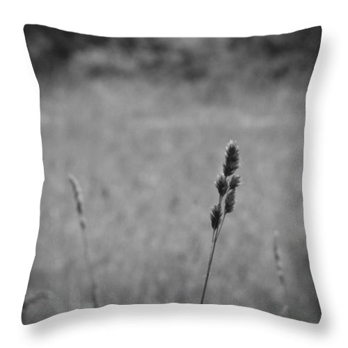 Nature Throw Pillow featuring the photograph Dust In The Wind by Rhonda Barrett