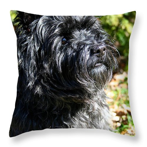 Dog Throw Pillow featuring the photograph Dusty by Susan Herber