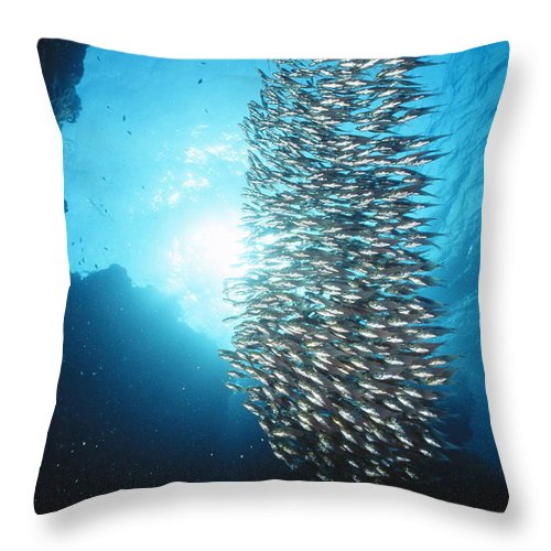 Egypt Throw Pillow featuring the photograph Dwarf Sweepers In Cave Entrance by Alex Misiewicz
