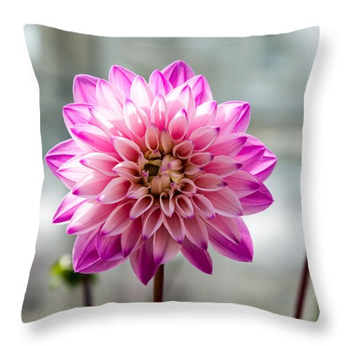 Flowers Throw Pillow featuring the photograph Dynamic Dahlia by Beverly Tabet