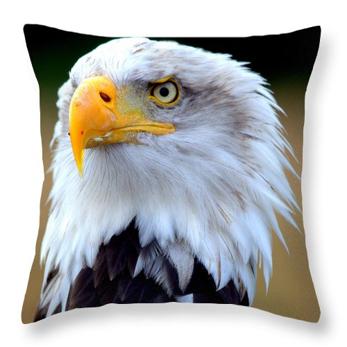 Bald. Eagle. Bird. Raptor Throw Pillow featuring the photograph Eagle Eye by Roger Parker