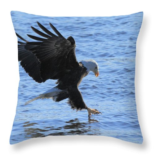 American Bald Eagle Throw Pillow featuring the photograph Eagle Grab by Coby Cooper