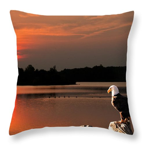 Eagle Throw Pillow featuring the photograph Eagle On Stump Overlooking Water At Sundown by Randall Branham
