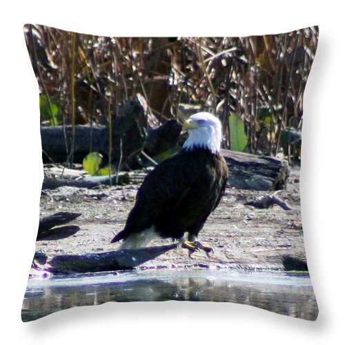 Eagle Throw Pillow featuring the photograph Eagle Posing By Water by Michael Waisner
