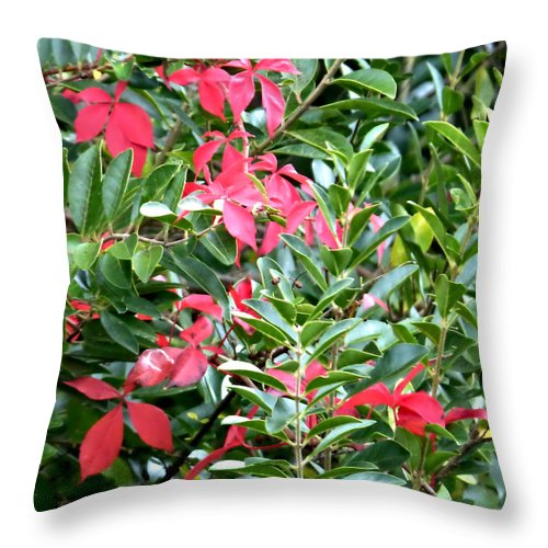 Park Throw Pillow featuring the photograph Early Autumn by Pete Trenholm