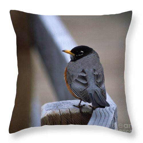 Robin Throw Pillow featuring the photograph Early Bird by Sharon Elliott