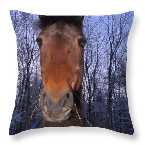 Horse Throw Pillow featuring the photograph Early One Winter Morning by Elizabeth Dow