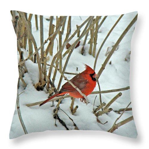 Cardinal Throw Pillow featuring the photograph Eastern Cardinal - Cardinalis Cardinalis by Mother Nature
