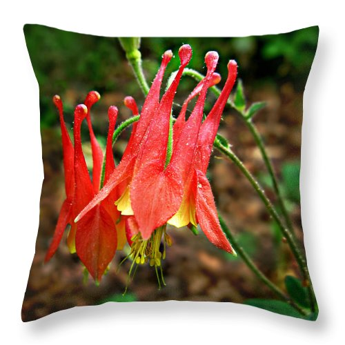 Aquilegia Canadensis Throw Pillow featuring the photograph Wild Eastern Columbine by William Tanneberger