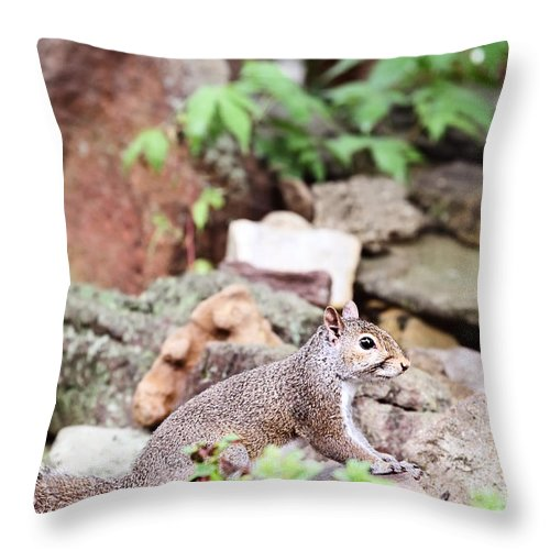 Squirrel Throw Pillow featuring the photograph Eastern Grey Squirrel by Stephanie Frey