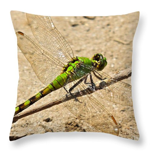 Erythemis Simplicicollis Throw Pillow featuring the photograph Eastern Pondhawk Dragonfly by Eve Spring