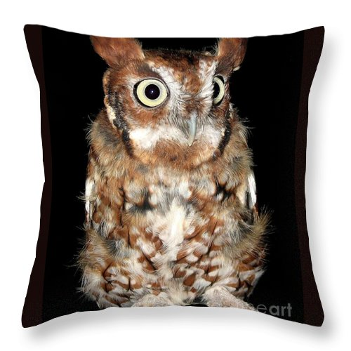 Screech Owls Throw Pillow featuring the photograph Eastern Screech Owl by Rose Santuci-Sofranko
