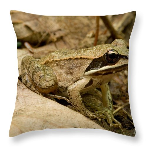 Fauna Throw Pillow featuring the photograph Eastern Wood Frog by Paul Whitten