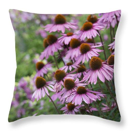 Echinacea Purpurea Throw Pillow featuring the photograph Echinacea Purpurea Rubinglow by Tim Gainey