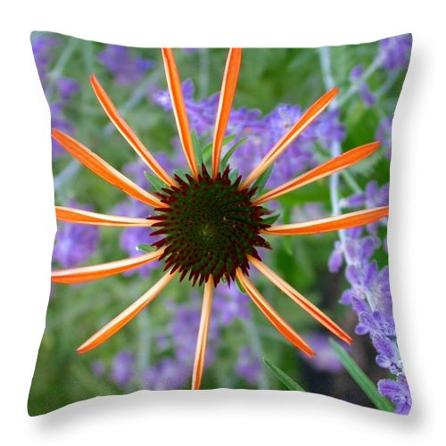 Throw Pillow featuring the photograph Echinacea Mango by Cynthia Wallentine