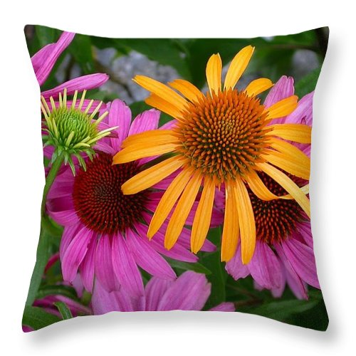 Throw Pillow featuring the photograph Echinacea Mango Meadowbrite by Cynthia Wallentine
