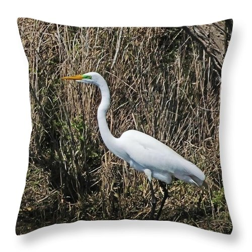 Egret Throw Pillow featuring the photograph Egret In Marsh In Display by Lizi Beard-Ward